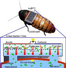 Connected_Coackroach