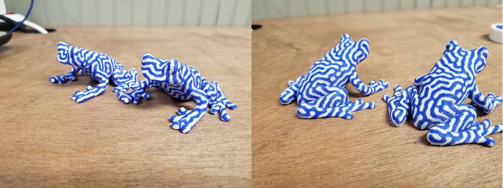 bi-color frogs